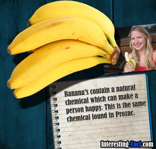 Banana-Fact.jpg